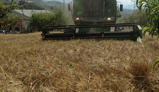 Threshing wheat - La Vittoria srl